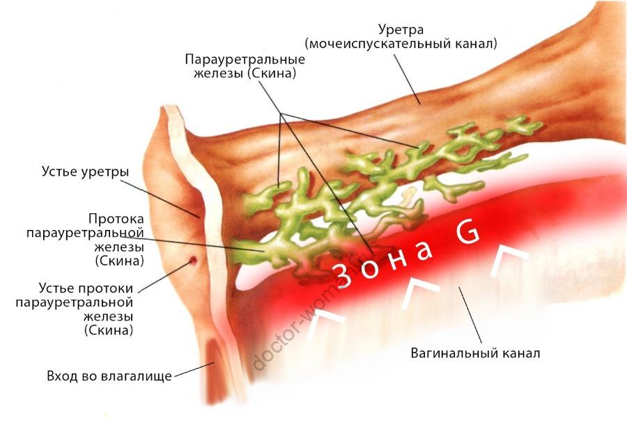 Зона G